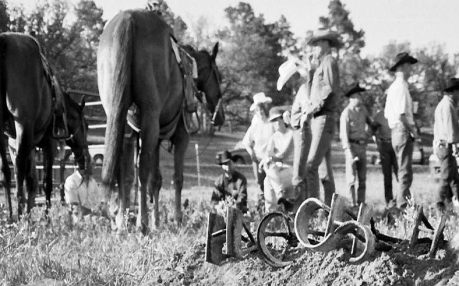 Arrivano i cowboys